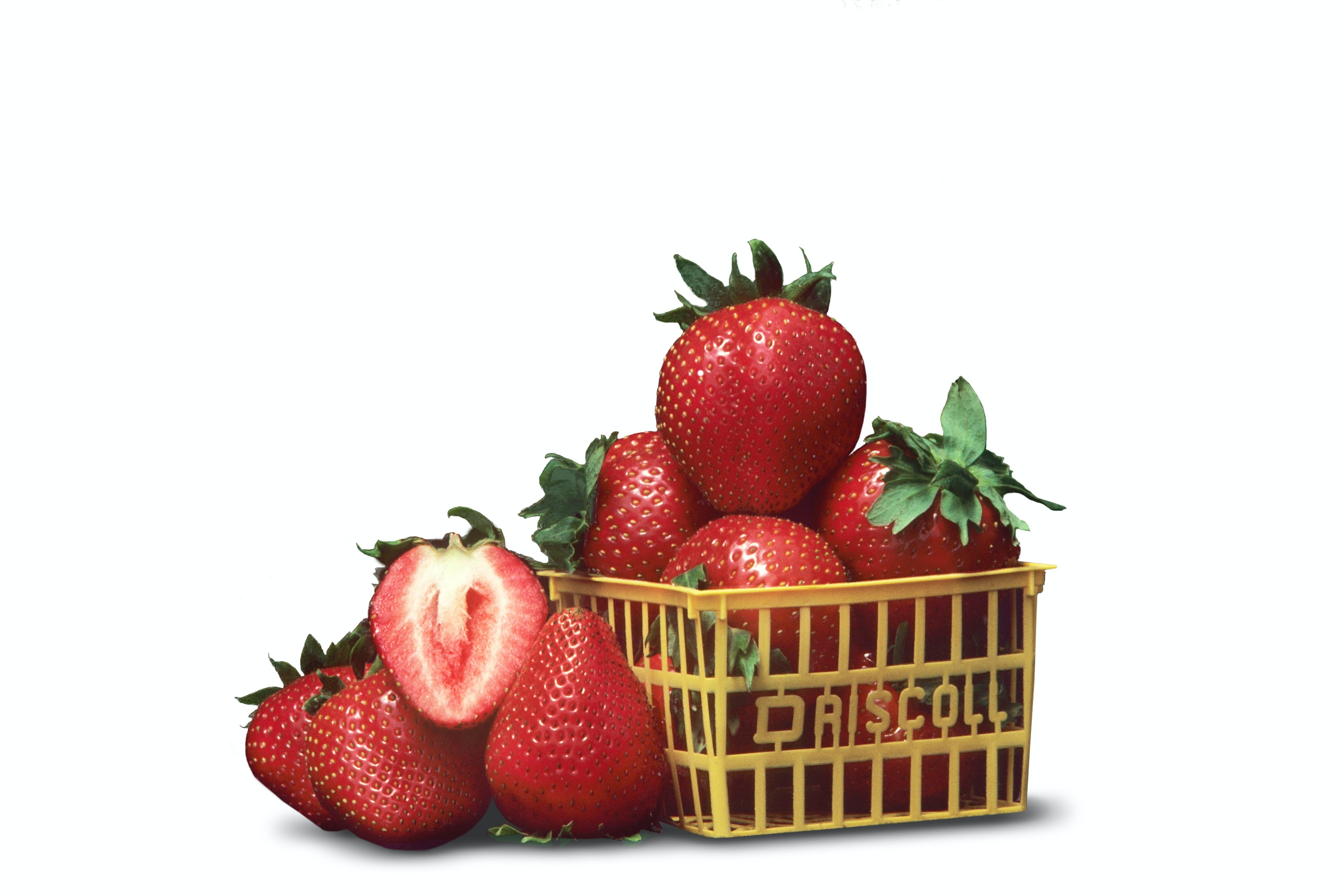 Ruyan strawberries: description of the variety, cultivation features, reviews 65