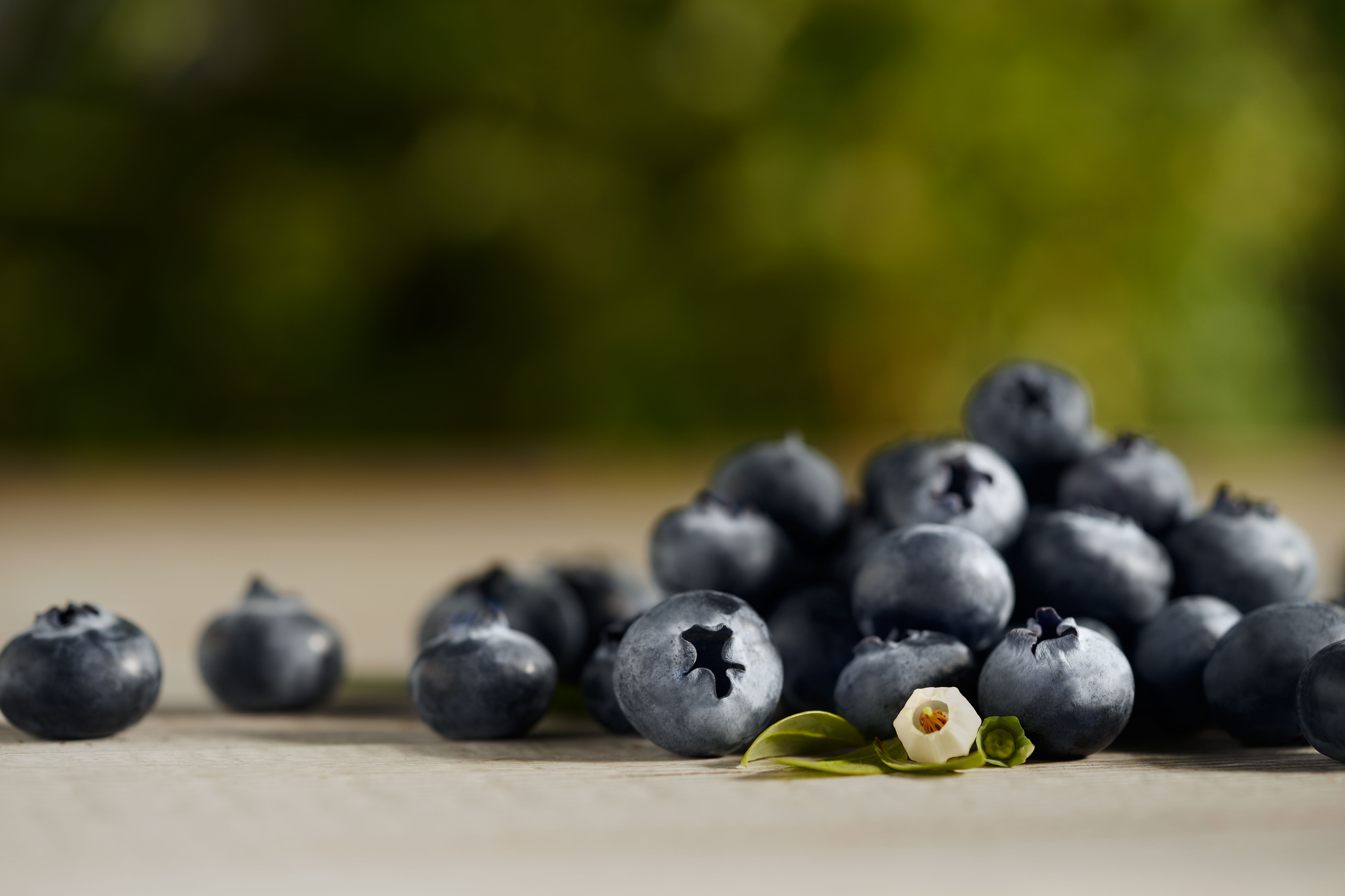 Blueberries Amp Organic Blueberries Driscoll S