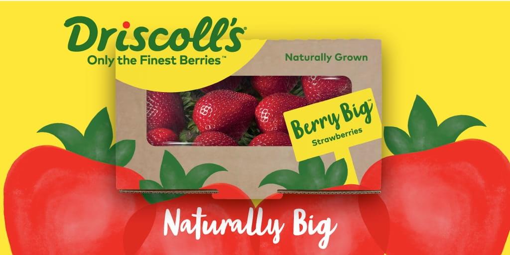 Driscoll's Berry Big Strawberries