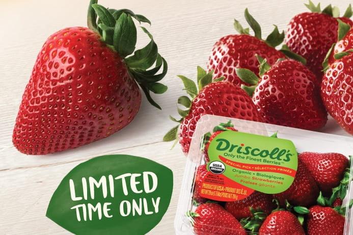 Jumbo Strawberries