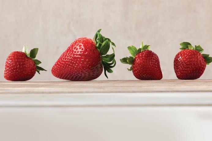 Jumbo and regular strawberries