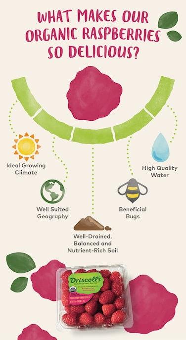 organic raspberry infographic