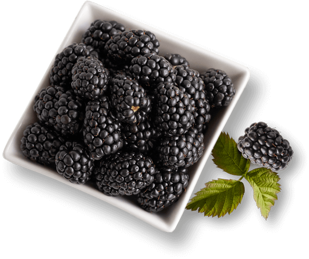 bowl of Driscoll's blackberries