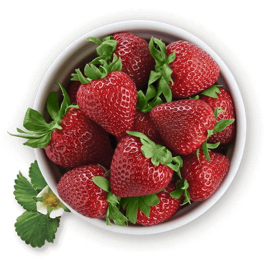 bowl of Driscoll's strawberries